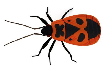 firebug: realistic 3d render of firebug