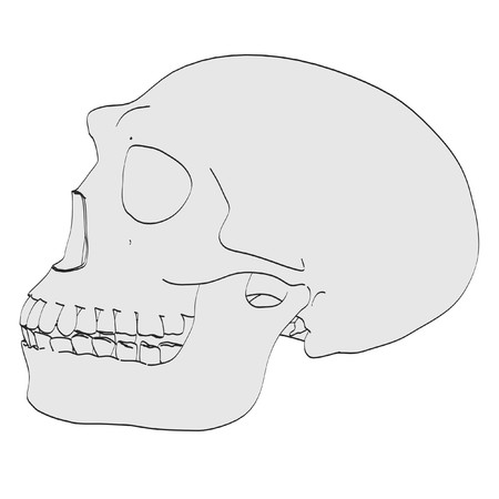 erectus: caricatura de cr�neo de homo erectus
