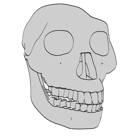 australopithecus: cartoon image of australopithecus skull Stock Photo