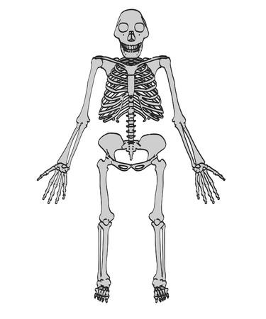 australopithecus: cartoon image of australopithecus afarensis