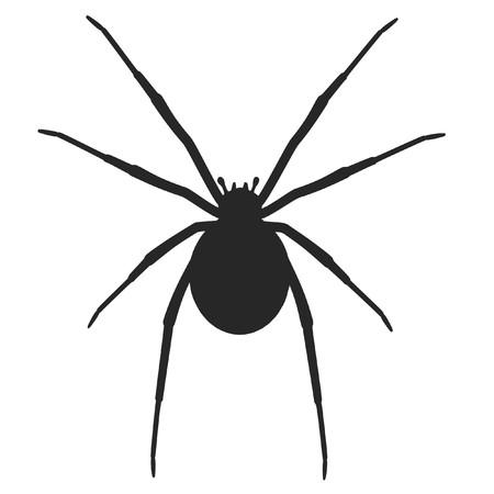 black widow: cartoon image of latrodectus hasselti Stock Photo