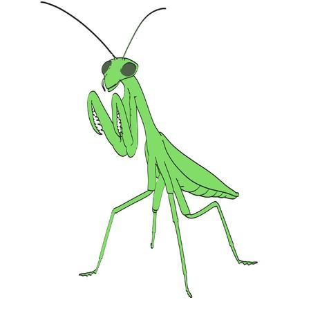 mantis: cartoon image of praying mantis