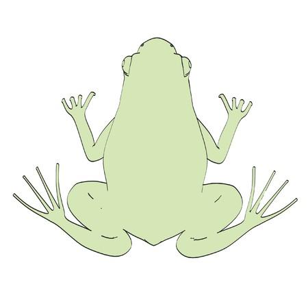 rana: cartoon image of rana esculenta