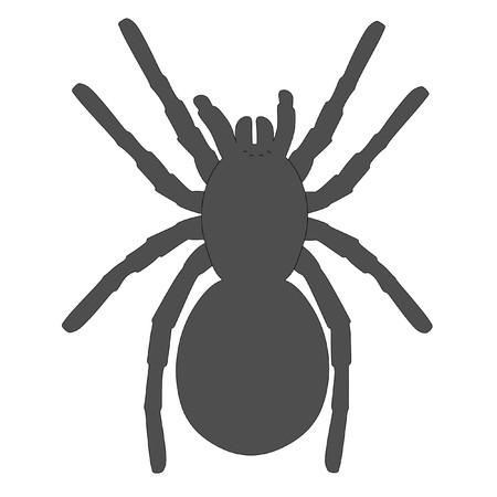 tarantula: cartoon image of tarantula spider