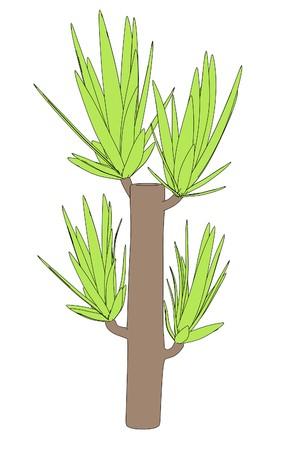 yucca: cartoon image of yucca tree