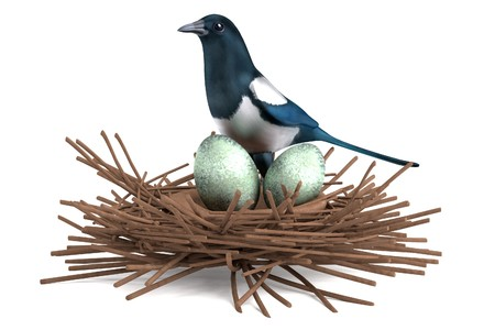 magpie: realistic 3d render of magpie with nest