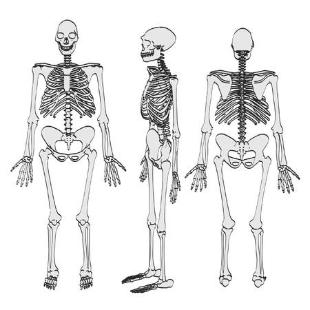 erectus: cartoon image of homo erectus
