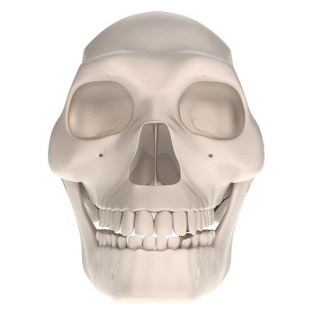 erectus: realistas 3D del cr�neo de homo erectus