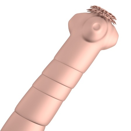 realistic 3d render of tapeworm Stock Photo