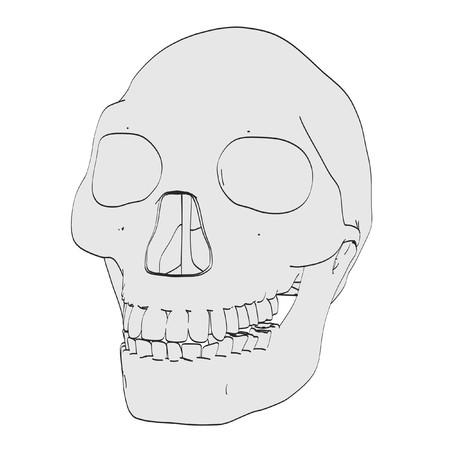 erectus: cartoon image of homo erectus skull