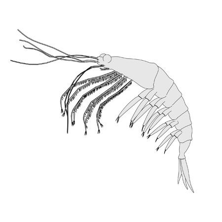 cartoon image of crustacean animal - krill Stock Photo