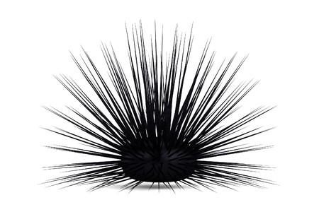 urchin: realistic 3d render of sea urchin Stock Photo