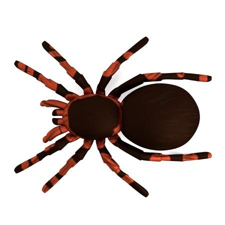 tarantula: realistic 3d render of tarantula Stock Photo