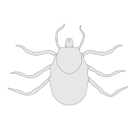 larva: cartoon image of tick larva