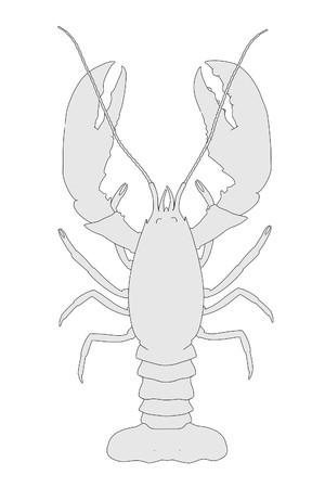 cartoon image of crayfish animal