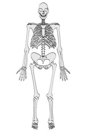 homo: cartoon image of homo erectus