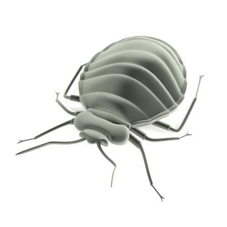 bedbug: realistic 3d render of bedbug