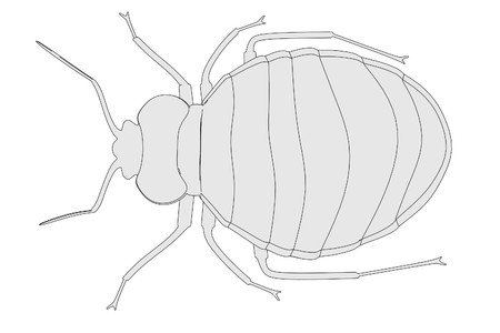 bedbug: cartoon image of bed bug Stock Photo