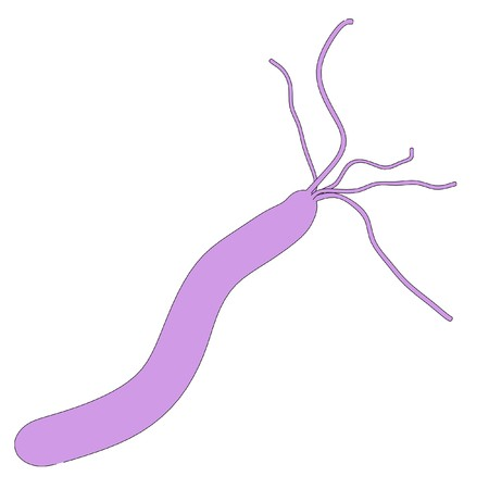 pylori: cartoon image of helicobacter pylori