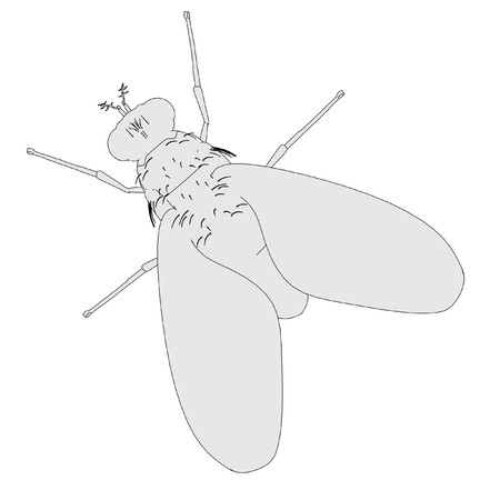 musca: cartoon illustration of home fly Stock Photo