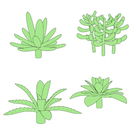 succulent: cartoon image of succulent plants Stock Photo