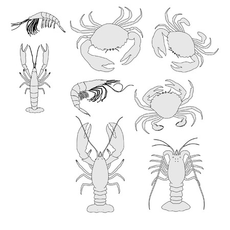 spiny: cartoon image of crustacean animal set