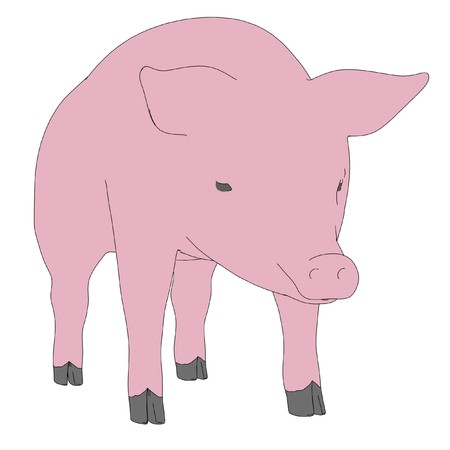male pig: cartoon image of male pig