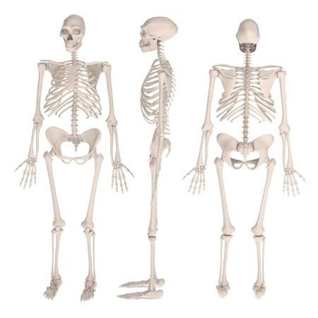 erectus: realistic 3d render of homo erectus