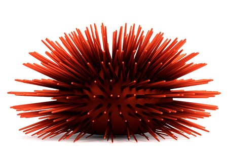 urchin: realistic 3d render of sea urchin Stock Photo