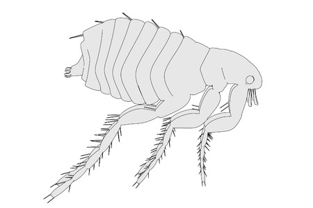 flea: cartoon illustration of flea insect