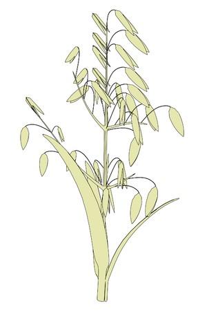 oat plant: cartoon image of oat plant