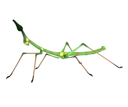 stick insect: realistic 3d render of stick insect