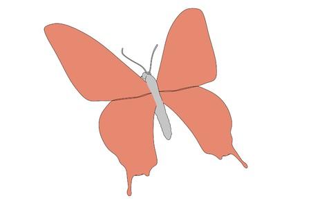 cartoon image of buttefly animal