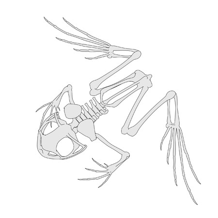 cartoon image of frog skeleton