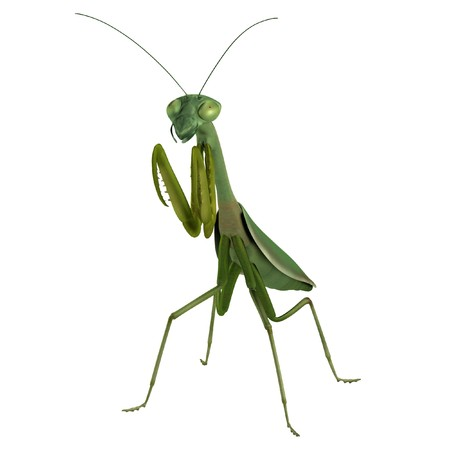 mantis: realistic 3d render of mantis Stock Photo