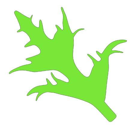salat: cartoon image of green salad