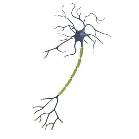 Réaliste, 3D, render de neurone Banque d'images - 26463188
