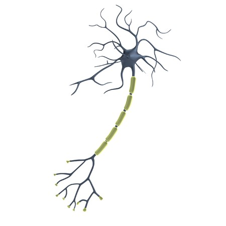 realistic 3d render of neuron