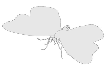 buttefly: cartoon image of buttefly animal
