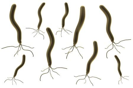 pylori: realistic 3d render of helicobacter pylori