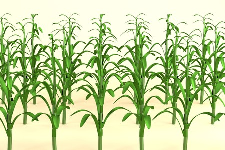 realistic 3d model of corn field photo