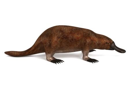 platypus: realistic 3d render of platypus