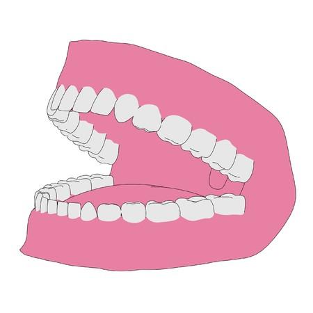 plumbum: cartoon image of human teeth