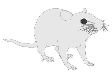 musculus: cartoon image of mus musculus