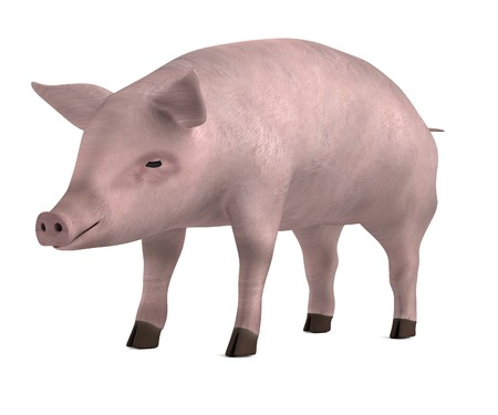 realistic 3d render of pig photo