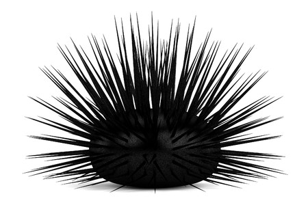 sea urchin: realistic 3d render of sea urchin Stock Photo
