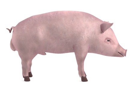 male pig: realistic 3d render of male pig Stock Photo