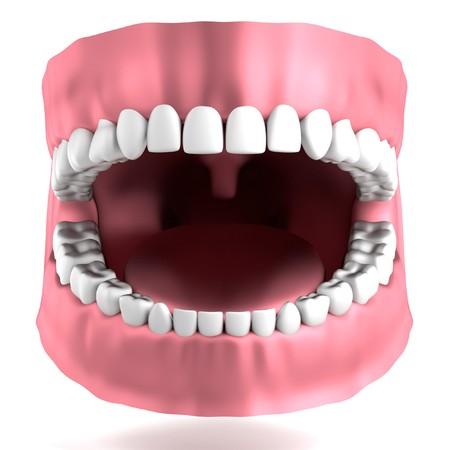 incisor: realistic 3d render of human teeth