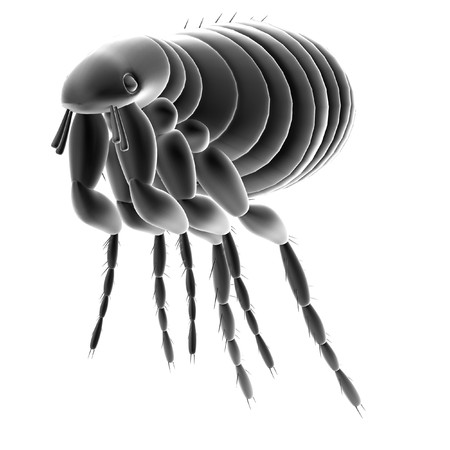 flea: realistic 3d render of flea