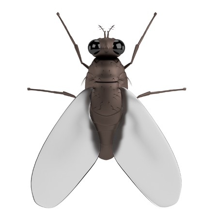 musca: realistic 3d render of fly Stock Photo